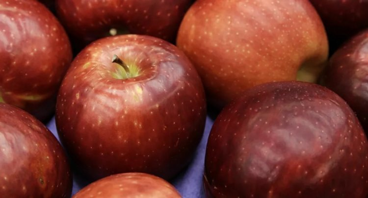 دراسة حديثة تكشف تأثيرات لن تتوقعها للتفاح على الدماغ